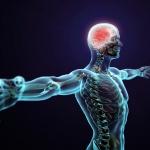 AD(H)D: Ons zenuwstelsel in balans